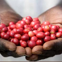 Coffee CSA Uses Technology to Connect Farmers to Customers