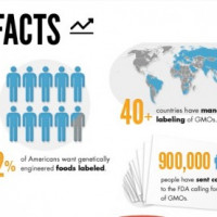 Infographic of the Week: Why GE Foods Should be Labeled