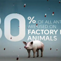 Consumer Insights: Growing Demand for Meat Without Antibiotics [Video]