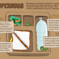 Infographic of the Week: How to Pack a Superbug-Free Lunch Box