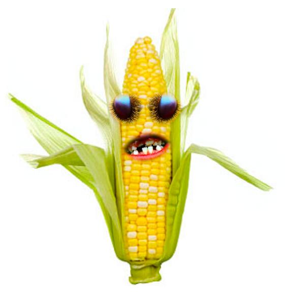 Картинки кукурузы прикольные