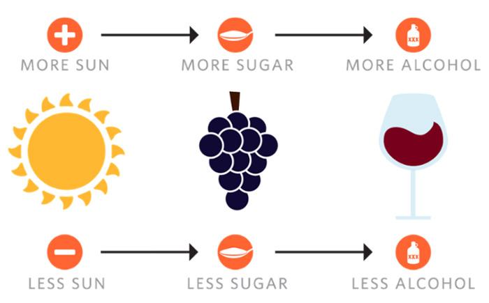 wine-simple-1-thumb-700x435-49092