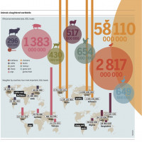 Infographic of the Week: Facts & Figures of Global Animal Production