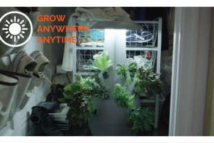at-home-gardening