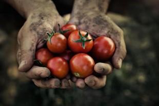 overstock-farmers-market