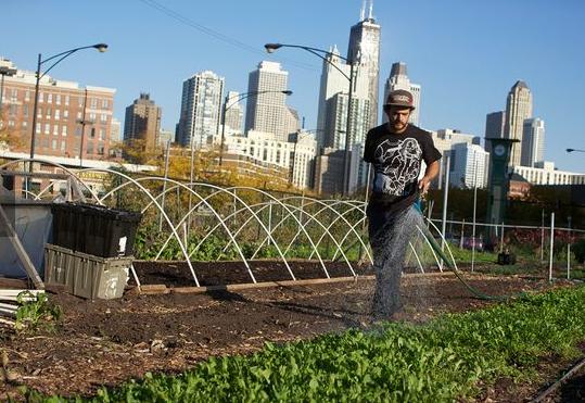 urban-farmers