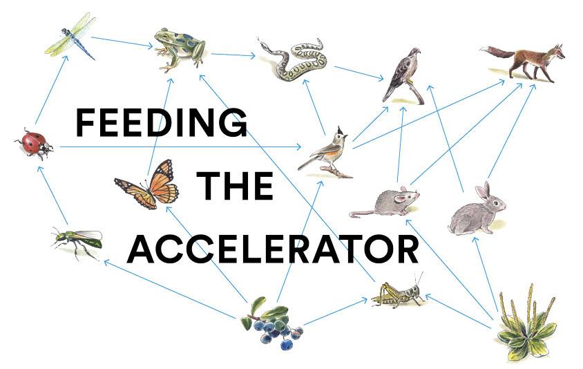 feeding-the-accelerator
