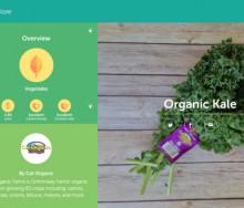 sage-food-startups