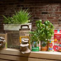 Turning Trash into Treasure: 6 Startups Reducing Food Waste