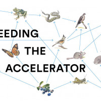 Meet Feeding the Accelerator's Food Tech Startups