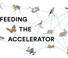 feeding-the-accelerator