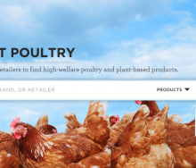 buyingpoultry
