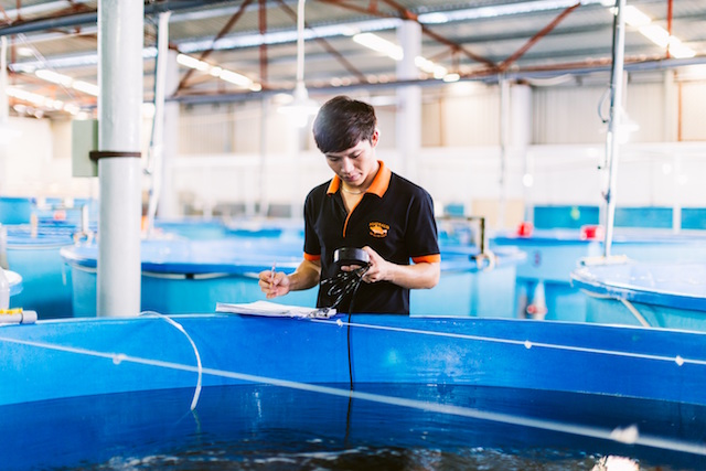 Australis Aquaculture is pioneering climate-smart ocean farming of barramundi for consumers, schools, hospitals, and businesses.