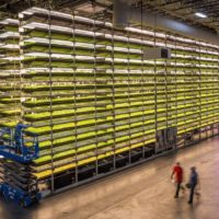 AeroFarms on Using Tech to Diversify Our Crops