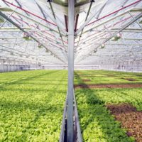 Gotham Greens on Using Hydroponics to Preserve Biodiversity